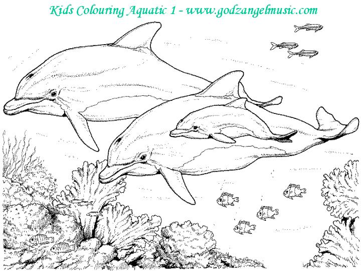 colouringpageaquatic1 colouringpageaquatic5