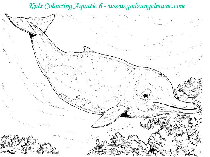 Coloring Pages Of Aquatic Animals : Download free coloring pages to print online